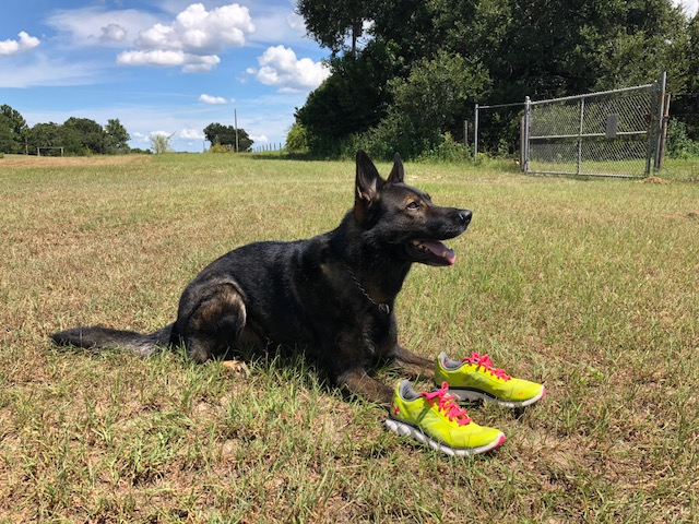 K9 Koa laces up her running shoes for K9s United Fun Run